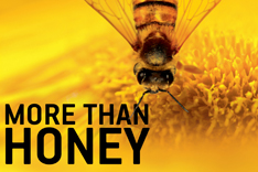 More than Honey Filmplakat mit Biene