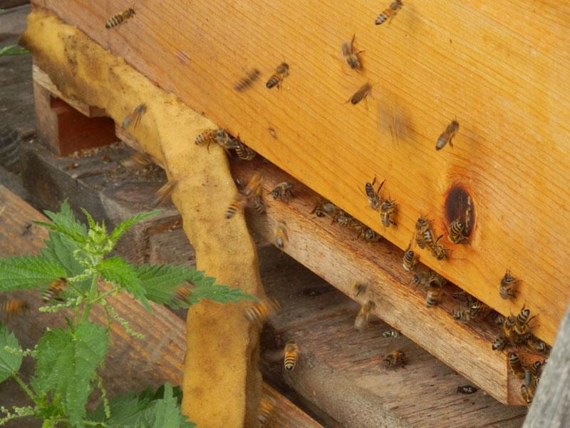 sonnengut gerster bienen mehr als honig verbraucher. Black Bedroom Furniture Sets. Home Design Ideas
